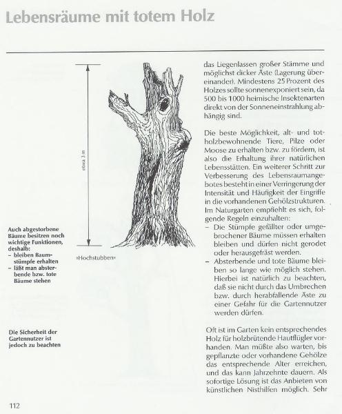 Altholz und abgestorbene Bäume