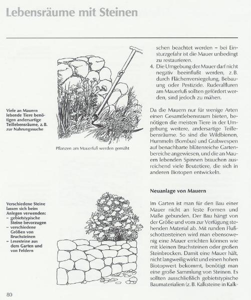 Neuanlage von Mauern